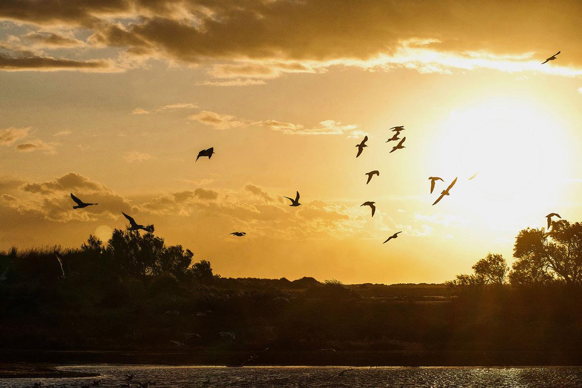 coucher-de-soleil-camargue-salin